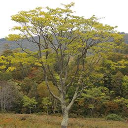 地球樹 - 地球環境を考えた商品...